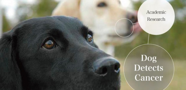 Could Dogs Learn to Sniff Out Ovarian Cancer?   Know Cancer Blog