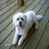 Profile picture of booboo3545